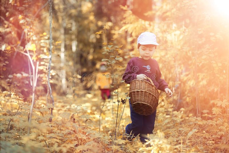 Los niños en el pueblo caminan a través del bosque y del gathe del otoño fotografía de archivo