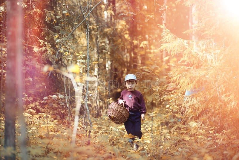 Los niños en el pueblo caminan a través del bosque y del gathe del otoño fotografía de archivo libre de regalías