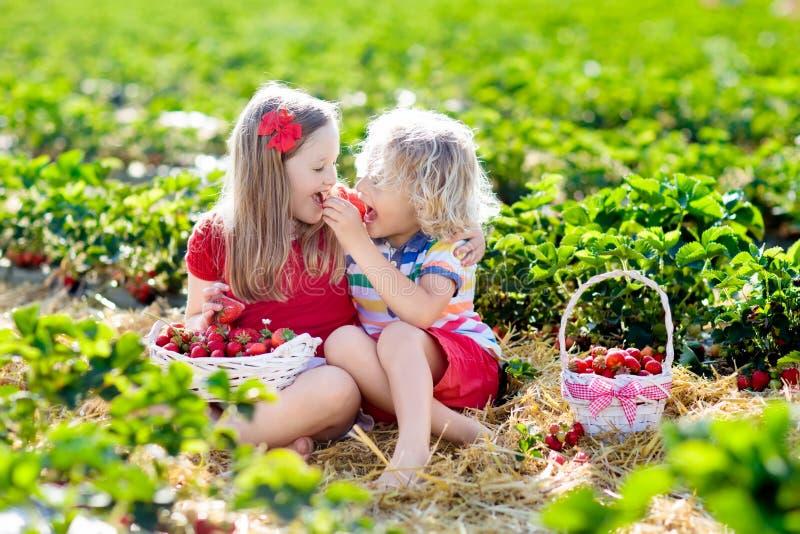 Los niños escogen la fresa en campo de la baya en verano imagenes de archivo