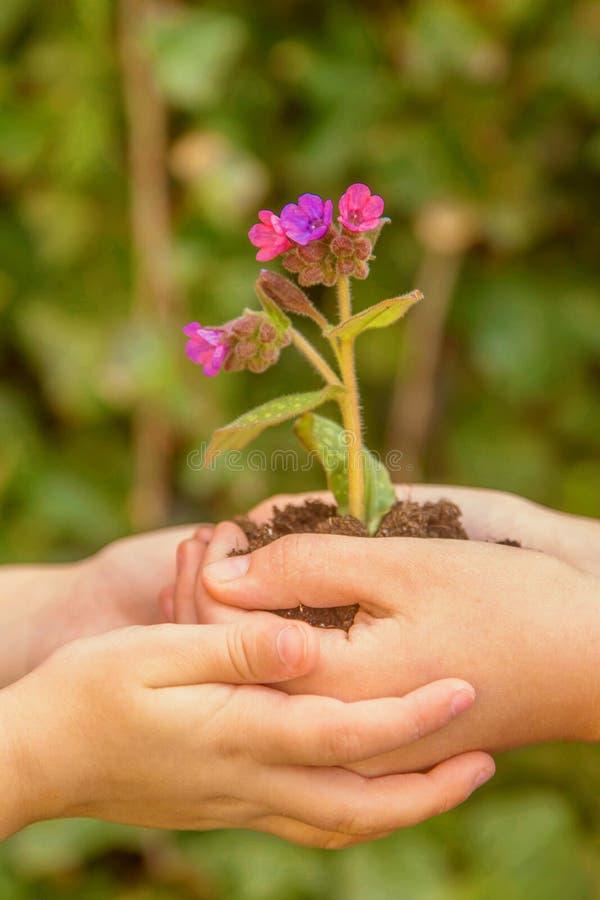 Los niños están celebrando un crecimiento de flor en la tierra imagenes de archivo