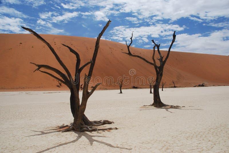 Árboles aterrorizados en Deadvlei, Sossusvlei, Namibia imagen de archivo