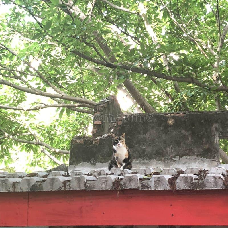Los observadores en el tejado foto de archivo