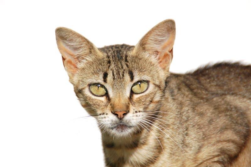 A los ojos de el gato imágenes de archivo libres de regalías