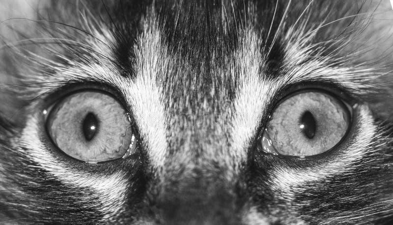 Los ojos de gato se cierran para arriba, foto macra fotografía de archivo