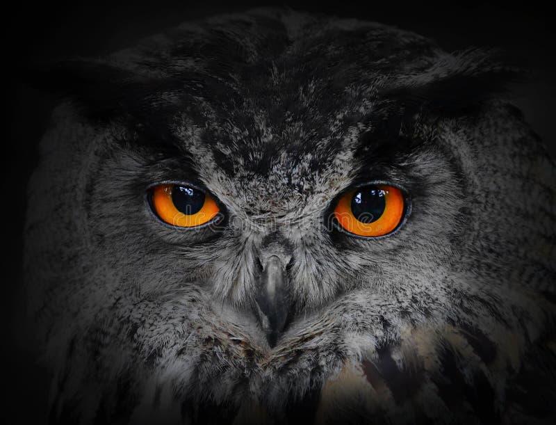 Los ojos malvados. imagen de archivo libre de regalías