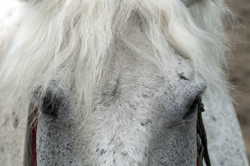 Los ojos tienen un caballo blanco situado en los lados fotografía de archivo