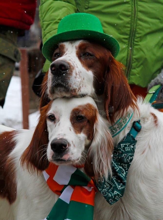 Los organismos rojos y blancos irlandeses en el día del ` s de St Patrick desfilan fotografía de archivo