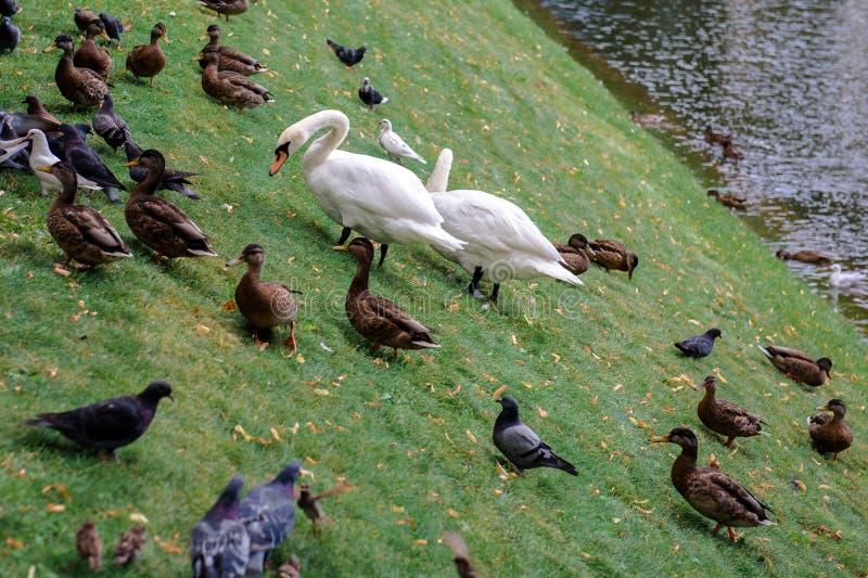 Los pájaros caminan en el parque de la ciudad foto de archivo libre de regalías