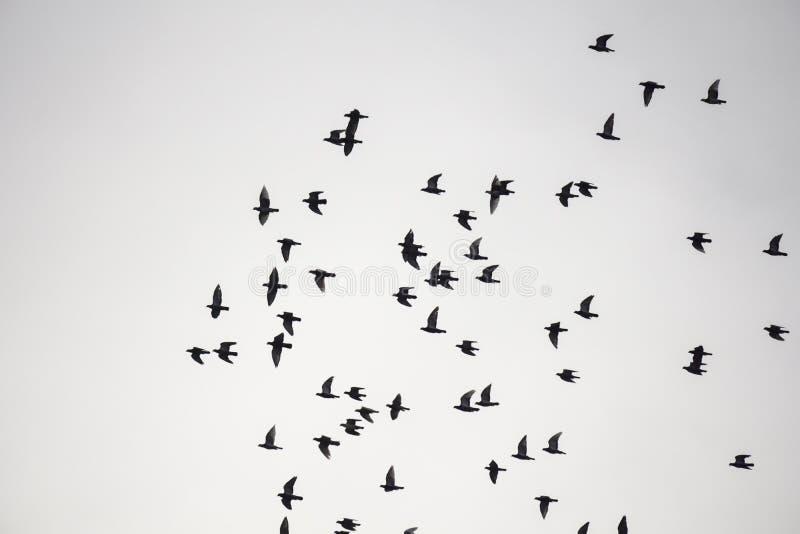 Los pájaros de la multitud están volando foto de archivo