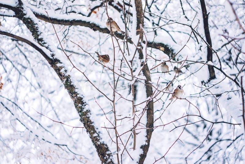Los pájaros esperan la semilla en rama de árbol de la nieve en el parque del invierno El Birdwatching en día frío de la nieve del fotos de archivo