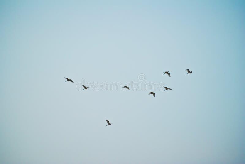 Los pájaros están volando foto de archivo