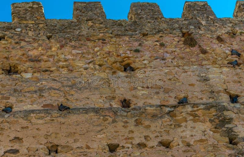 Los pájaros jerarquizan en las paredes viejas de la ciudad de Segovia fotografía de archivo