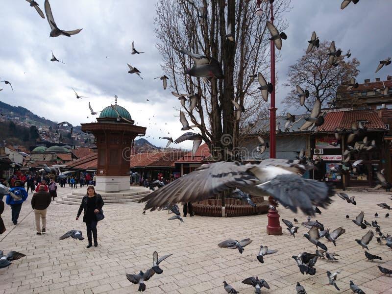 Los pájaros libres foto de archivo libre de regalías