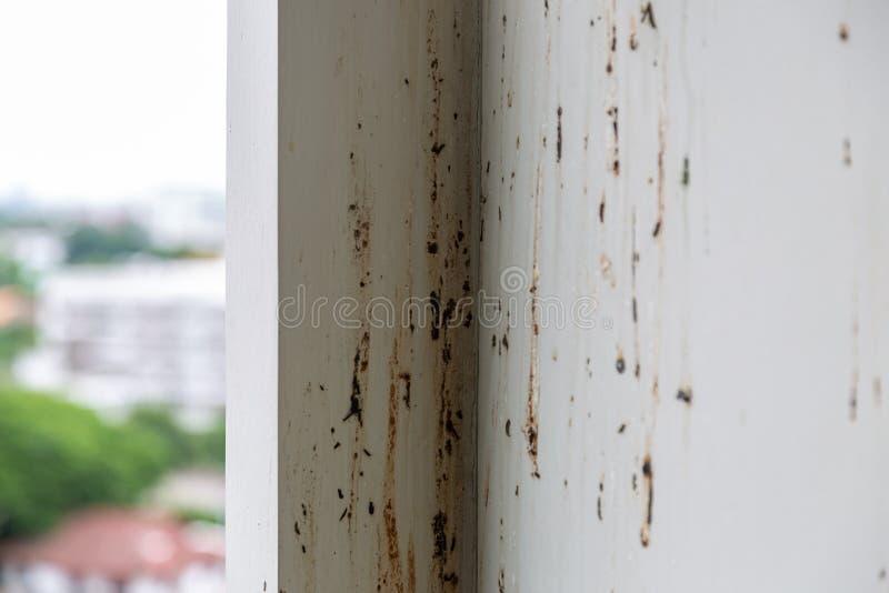 Los pájaros o las palomas hacen la pared sucia cayendo porciones de heces cuando el dueño del condominio no es estancia en el sit imagen de archivo