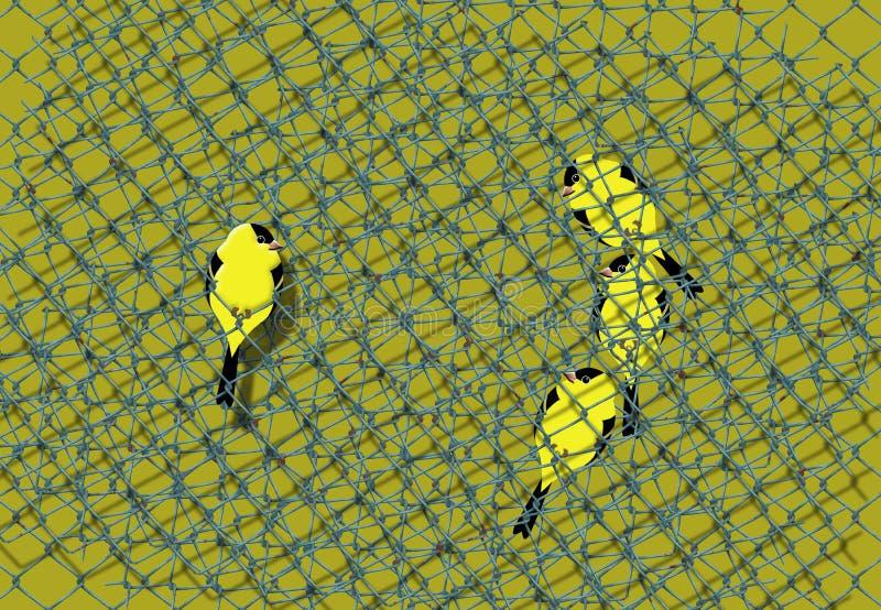 Los pájaros Pájaro-amarillos y negros libres que se asemejan a jilgueros se ven detrás de una malla del alambre de una jaula mien ilustración del vector