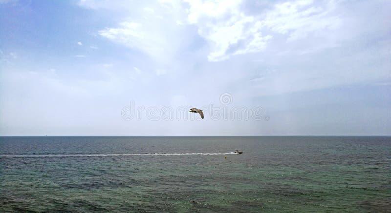 Los pájaros persiguen el barco de la pesca profesional de la costa de España fotografía de archivo