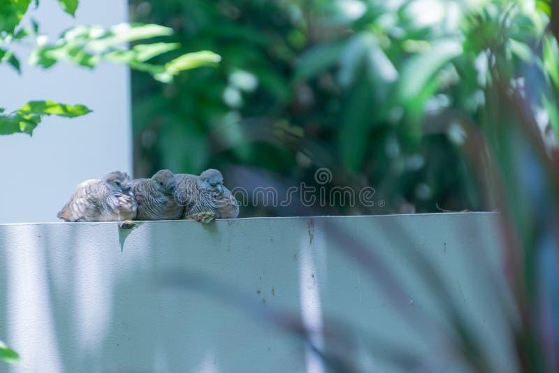 Los pájaros que duermen en la pared fotos de archivo