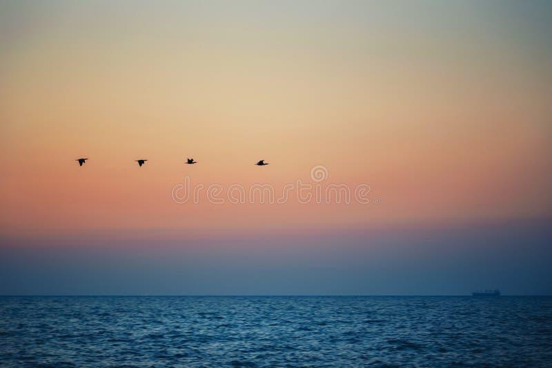 Los pájaros siluetean el vuelo sobre el mar contra la puesta del sol, salida del sol imagen de archivo