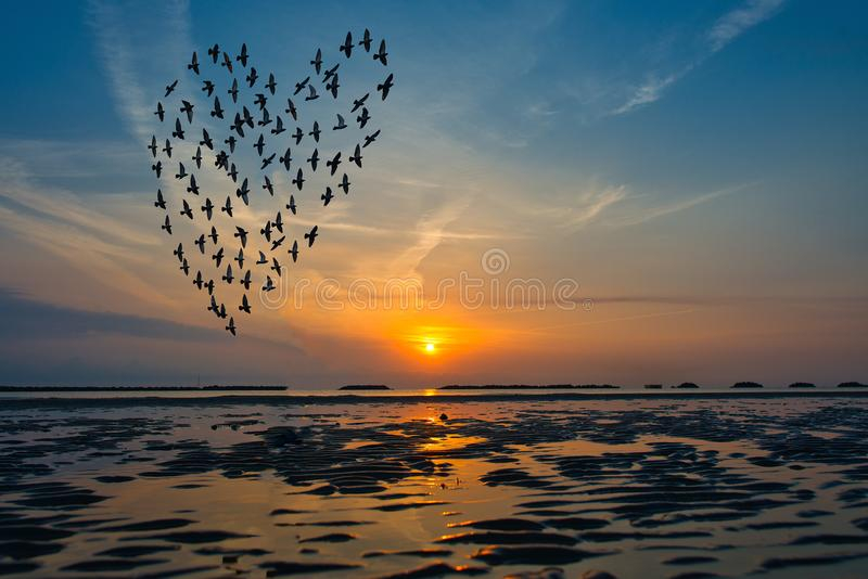 Los pájaros siluetean el vuelo sobre el mar contra salida del sol en las FO imagen de archivo libre de regalías