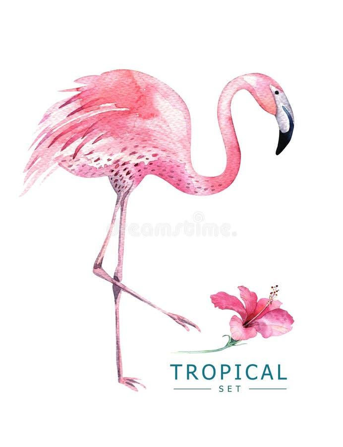 Los pájaros tropicales dibujados mano de la acuarela fijaron de flamenco Ejemplos exóticos del pájaro, árbol de la selva, arte de ilustración del vector