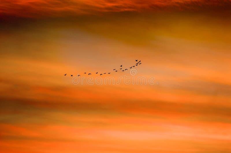 Los pájaros vuelan juntos en el mar en la puesta del sol con la naranja hermosa imagenes de archivo