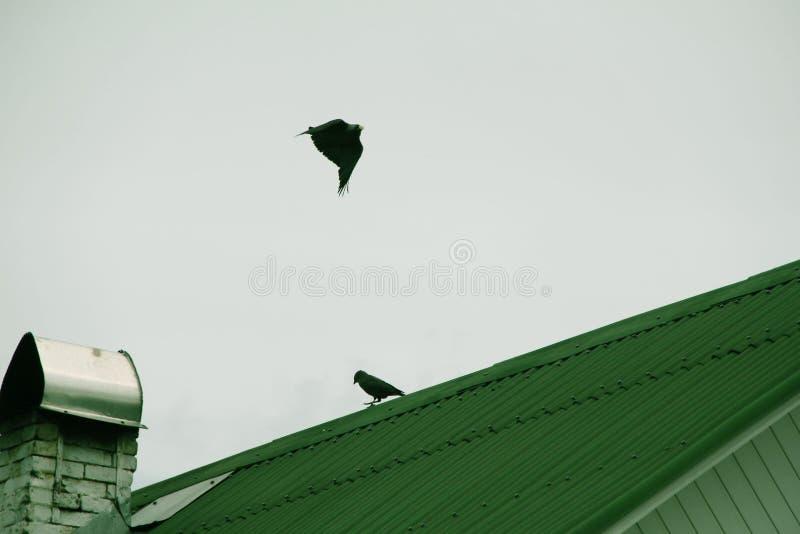 Los pájaros vuelan y se sientan en el tejado foto de archivo