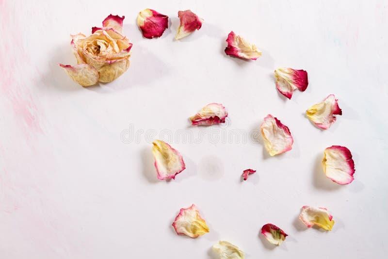 Los pétalos color de rosa secados son fondo blanco que cae foto de archivo libre de regalías