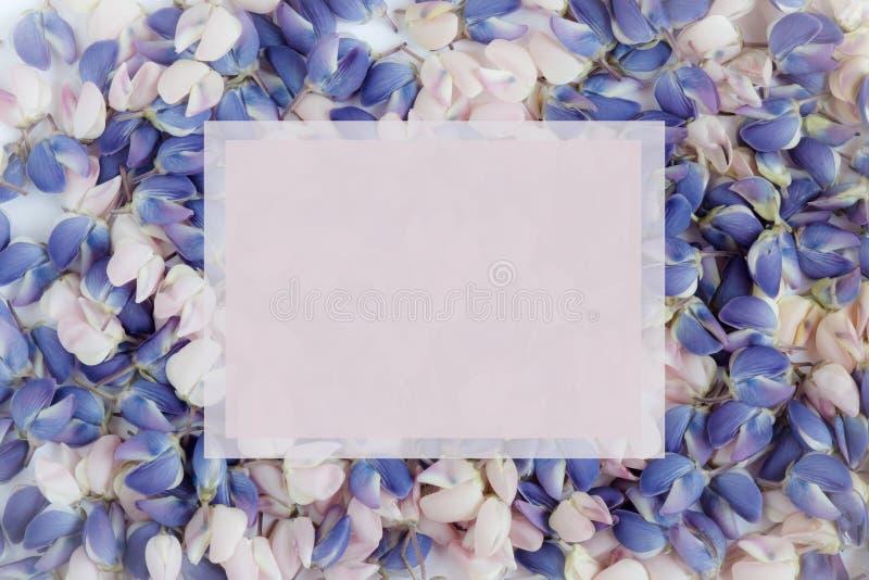 Los pétalos de la flor del azul y del lupine rosado Copie el espacio imagenes de archivo