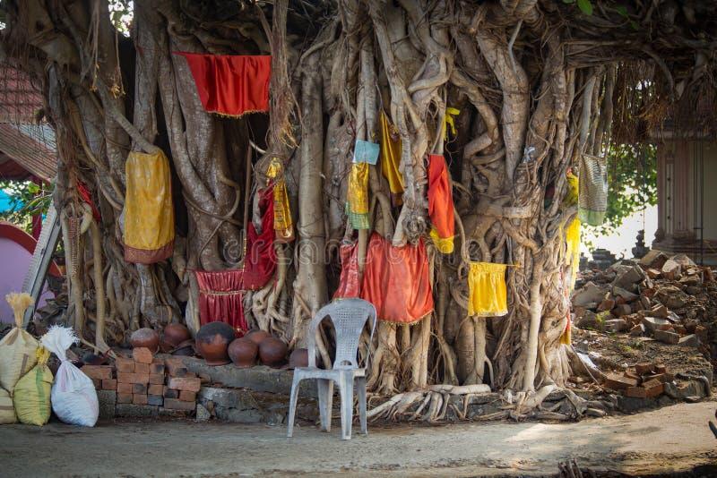 Los pa?os coloridos est?n colgando en un higo sagrado, la India foto de archivo