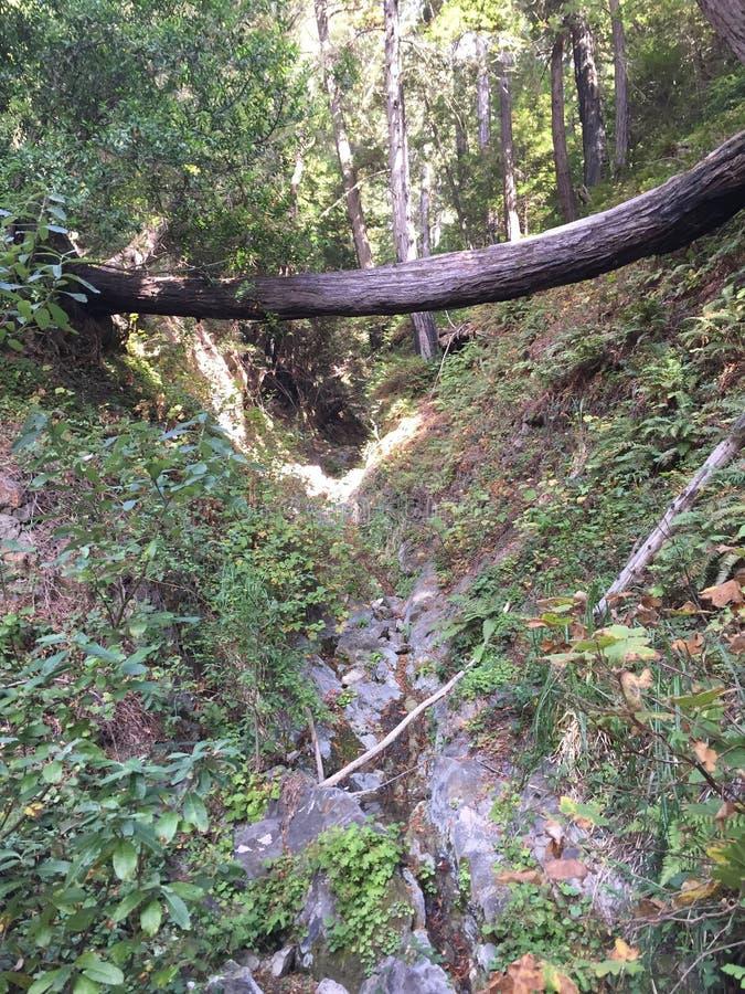 Los padres国家森林红木树丛大瑟尔加利福尼亚-下落的树做横跨峡谷的桥梁 图库摄影