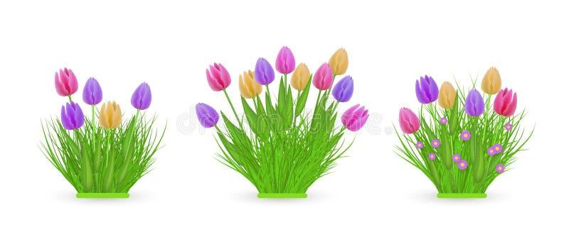 Los paquetes florales del tulipán de la primavera de diversas anchuras fijaron con las flores coloridas frescas en hierba verde stock de ilustración