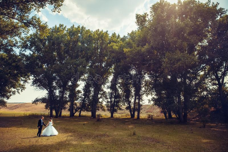 Los pares de la boda están caminando en el bosque imagen de archivo