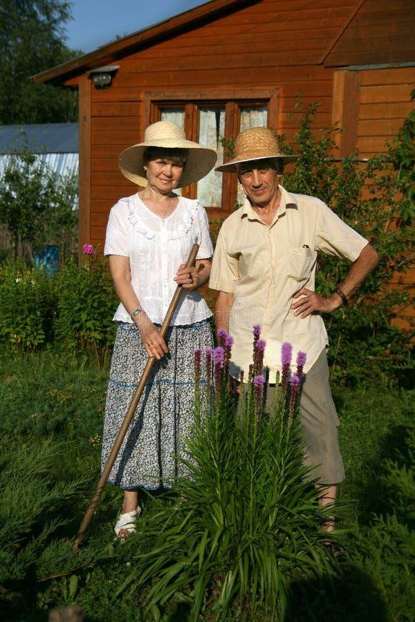 Los pares mayores en un arbusto del snakeroot del botón fotos de archivo