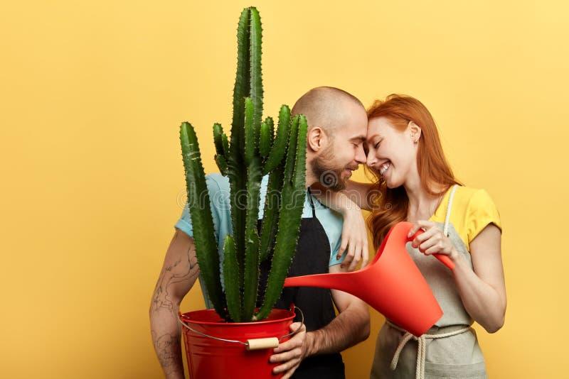 Los pares románticos divertidos están encariñados con tomar el cuidado de flores imágenes de archivo libres de regalías