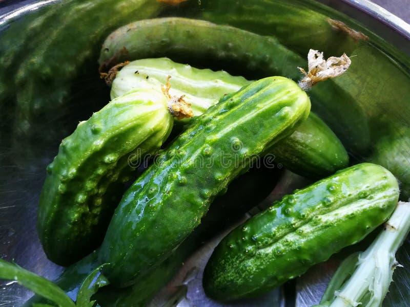 Los pepinos, escogieron recientemente los pepinos deliciosos de cosecha propia en un cuenco de acero fotografía de archivo
