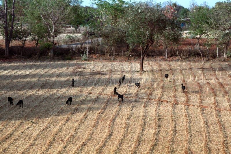 Los pequeños campos alternan con las charcas, los caminos y la correa de madera del límite foto de archivo