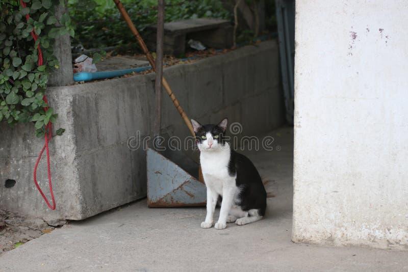 Los pequeños gatos están mirando fijamente la curiosidad el homeStripe exterior fotografía de archivo