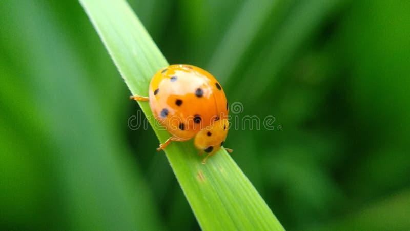 los pequeños insectos verdes se encaraman en sus fingeres fotografía de archivo libre de regalías