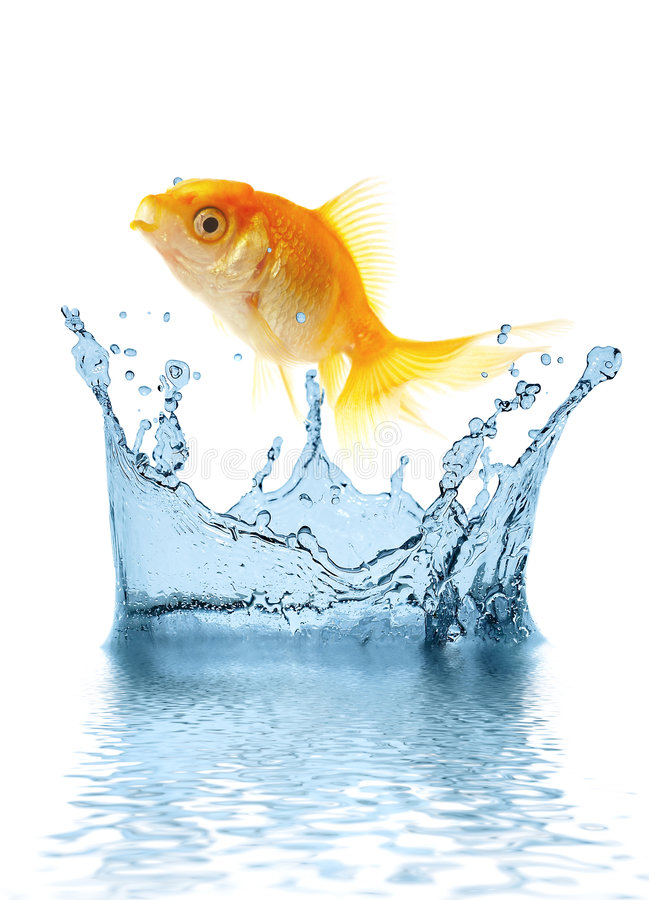 Los pequeños pescados del oro foto de archivo