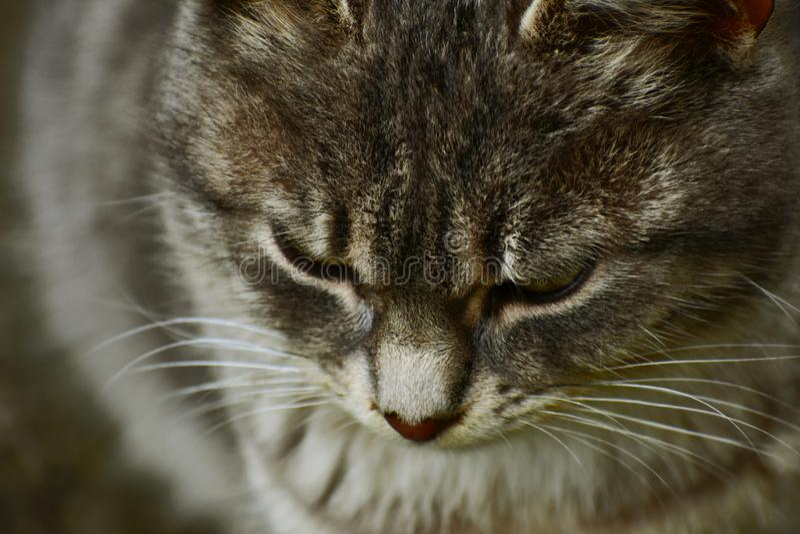 Los pequeños restos del gato imágenes de archivo libres de regalías