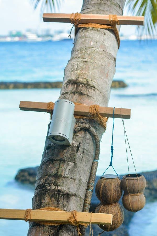 Los pequeños tarros con las cuerdas hechas de cáscaras del coco cuelgan en la palmera fotografía de archivo