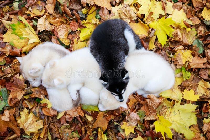 Los perritos el dormir fotografía de archivo