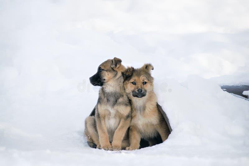 Los perritos sin hogar se aferraron el uno al otro para mantener caliente Stra de los problemas fotografía de archivo libre de regalías
