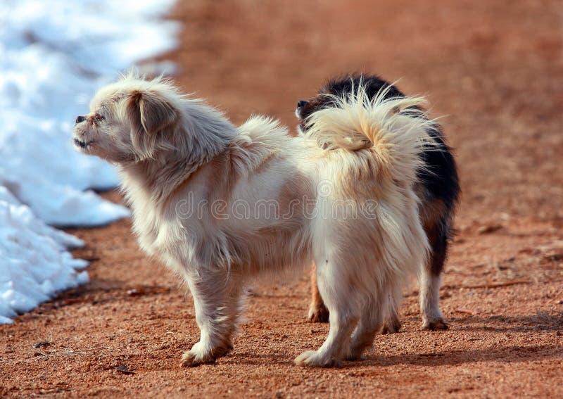 Los perros imagen de archivo libre de regalías
