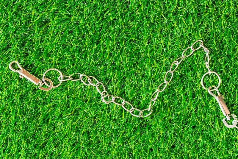 Los perros de cadena del intérprete en hierba verde texturizan estafa del eco del fondo fotografía de archivo
