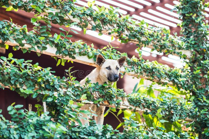 Los perros hechan una ojeada la casa extraña con la cubierta del árbol imagenes de archivo