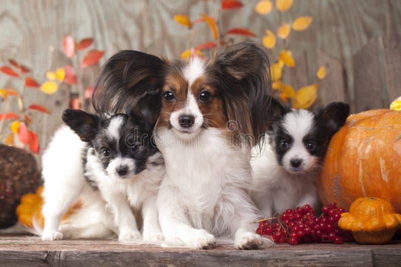 los perros miman y su perrito fotografía de archivo