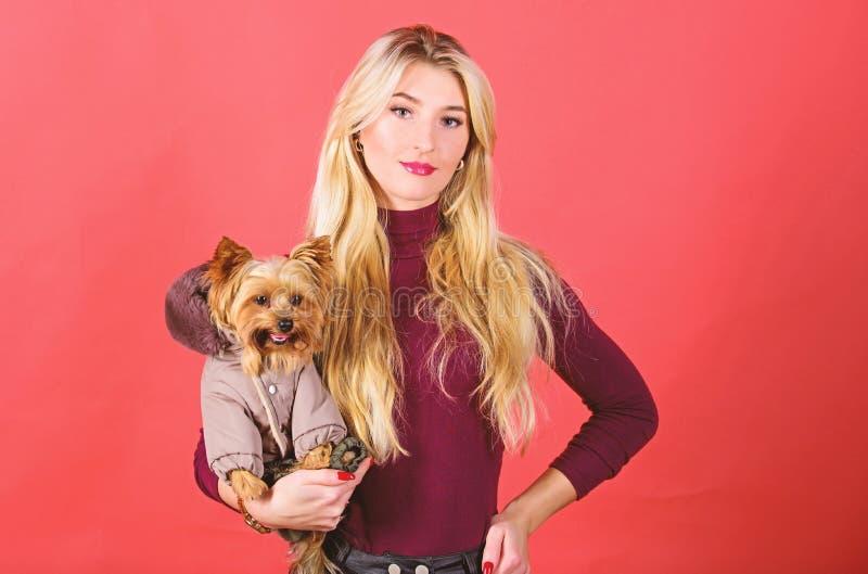 Los perros necesitan la ropa ropa y accesorios Fuentes del animal dom?stico Vestido del perro para el tiempo fr?o Qu? perro las r foto de archivo