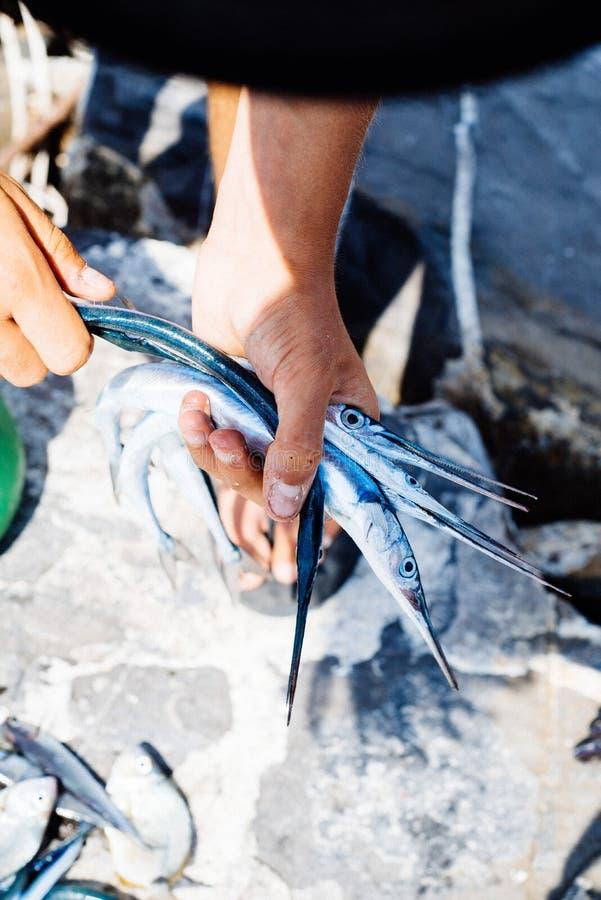 los pescados acaban de coger en el mar Mediterráneo, aguja en el Han foto de archivo
