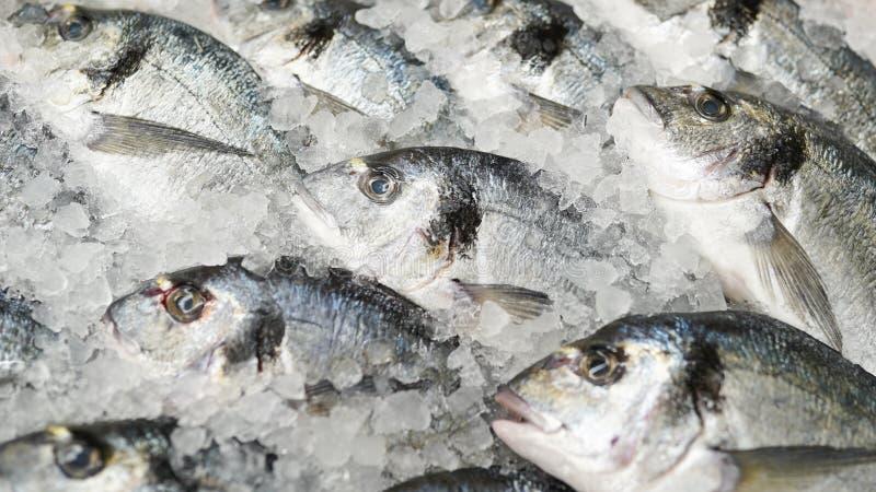 Los pescados congelados, se cierran encima de pescados frescos en el cubo de hielo o de pescados congelados en el uso del colmado fotos de archivo libres de regalías